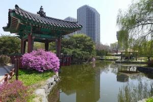 SEOUL - NAMI - EVER - 5 NGÀY - HOA ANH ĐÀO 2019 - HK HÀN QUỐC